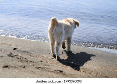 Beautiful photo of a small puppy standing on the seashore. Background for advertising puppies and dogs.