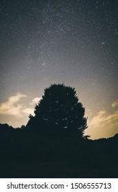 Beautiful photo of a tree at night with many stars. Opakua, Alava, Basque Country