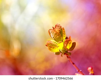 Beautiful photo of young spring leaves of trees on a multicolored background