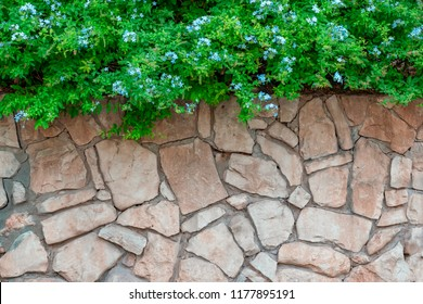 Beautiful photophone, wall with rough masonry and green grass and blue flowers, background