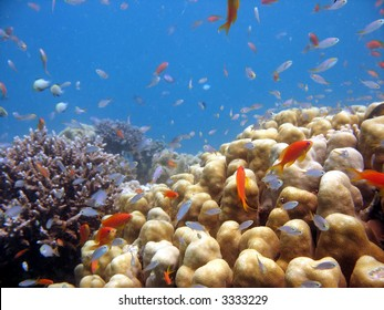 A beautiful picture of a coral reef teeming with life. shot in the Red Sea