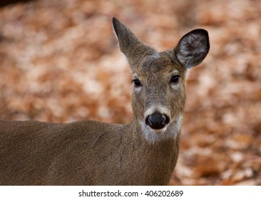 Beautiful picture of the cute wild deer in the forest