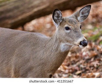 Beautiful picture with the cute wild deer in the forest