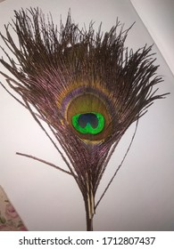 Its beautiful picture of a peacock feather