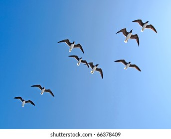 Beautiful picture of seagulls in flight.