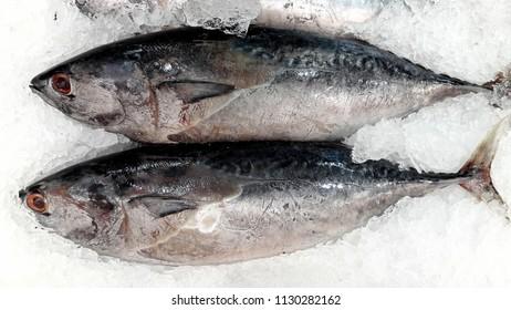 beautiful picture of skipjack tuna (Katsuwonus pelamis) in Thai market