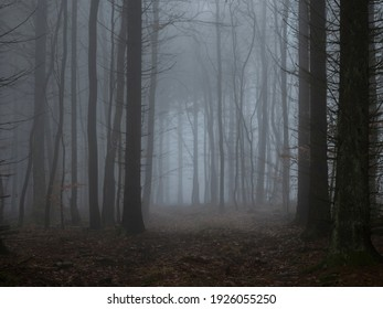 A beautiful picture of trees in the mist , a nice photo