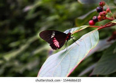 Beautiful pictures from butterflies. I shot these pictures in a local zoo in the Netherlands