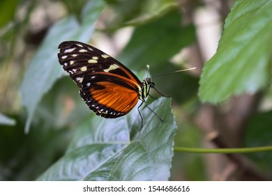 Beautiful pictures from butterflies. I shot these pictures in a local zoo in the Netherlands.