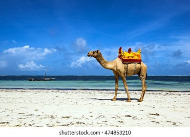 Beautiful picturesque African coast Diani in Kenya