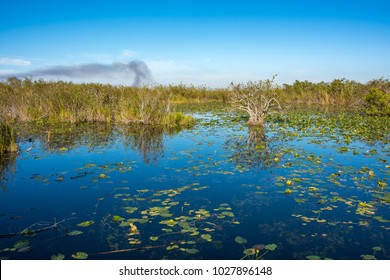Beautiful and picturesque Everglades National Park in Homestead, Florida.  Everglades National Park is also a International Biosphere Reserve and  UNESCO World Heritage Site.