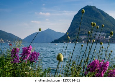 Beautiful picturesque view on the Lake Lugano and swiss alps through pink flowers in Lugano, Switzerland.