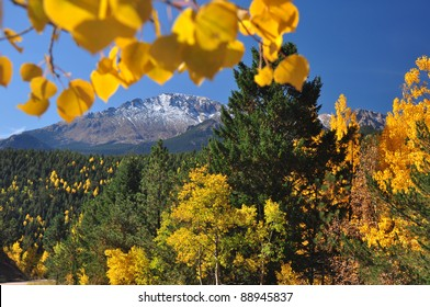 Beautiful Pikes Peak in Autumn with yellow Aspen Leaves