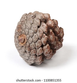 Beautiful pine cone isolated on white background close up