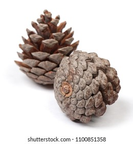 Beautiful pine cones isolated on white background close up