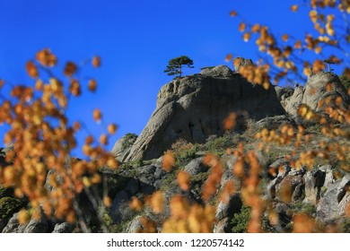 Beautiful pine in the mountains and blue sky surrounded by yellow autumn leaves
