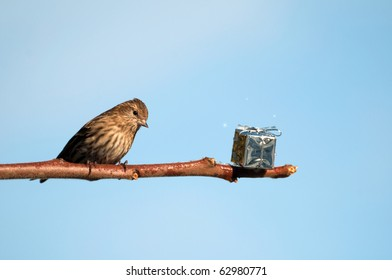 A beautiful pine siskin finds a shiny present left on a branch for him at Christmas time with copy space.