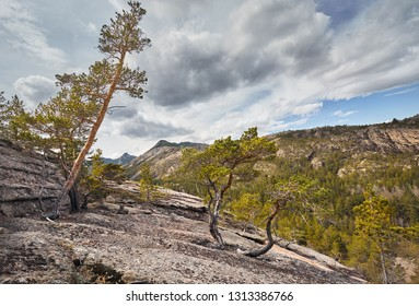 Beautiful pine trees in the forest at rocky mountains of Karkaraly national park in Central Kazakhstan