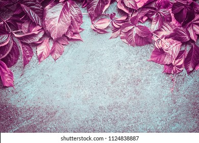 Beautiful pink autumn wild grapes  leaves composing on dark vintage background, top view. Fall leaves border