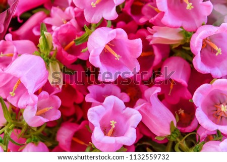 Beautiful Pink Bell Flowers Background Stock Photo Edit Now