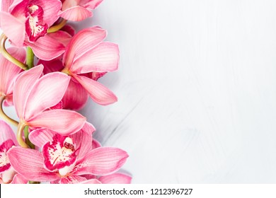 Beautiful pink blossoms of Cymbidium orchids. Pretty exotic Japanese garden flowers, tropical orchids in full bloom. Copy space