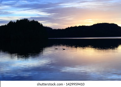 Beautiful pink, blue, yellow, purple sunset on lake with loons in water