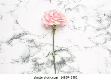 Beautiful pink carnation flower on marble background