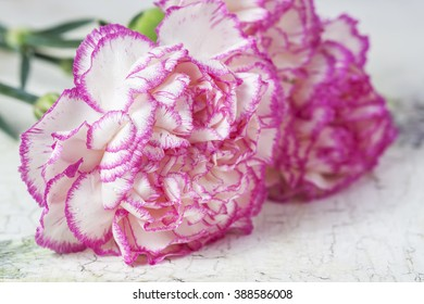 Beautiful pink carnation flowers on a white wooden background. Selective focus