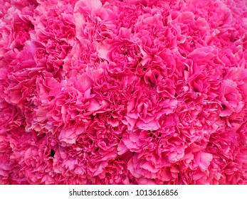 beautiful pink carnations