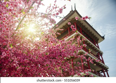 Beautiful pink cherry blossom (Sakura) flower, and with vintage  building background.Soft focus and lighting flare effect.