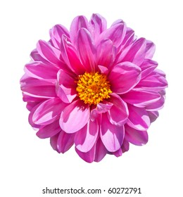 Purple flower with yellow center images stock photos vectors beautiful pink dahlia flower with yellow center isolated on white background mightylinksfo