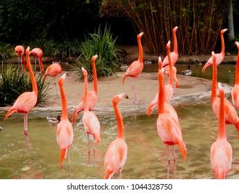 Beautiful Pink flamigos