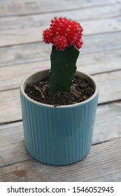 Beautiful pink flower blossom on a single stem spikey cactus in a ceramic flower pot