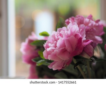 Beautiful pink flower and bokeh for background.