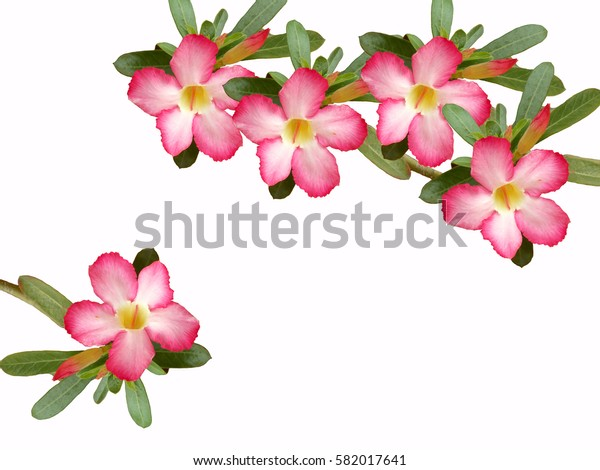 Beautiful pink flower bouquet on white background