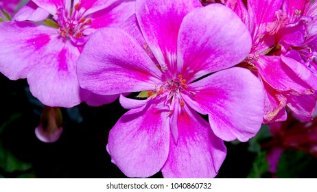 Beautiful pink flower close up.