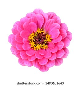 Beautiful pink flower isolated on a white background