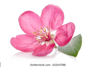 beautiful pink flower isolated on white background