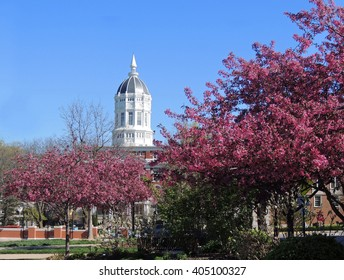 Beautiful pink flowering trees on a sunny day in springtime at   Jesse hall  on the university of missouri campus, columbia, missouri