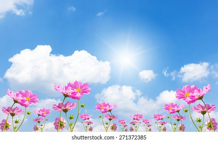 Beautiful pink flowers and Blue sky with cloud