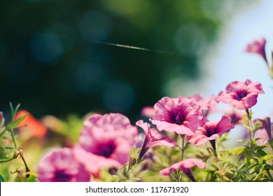 Beautiful pink flowers with colored bokeh in summer garden