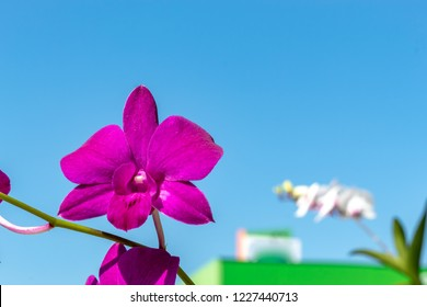 Beautiful pink flowers in the garden.