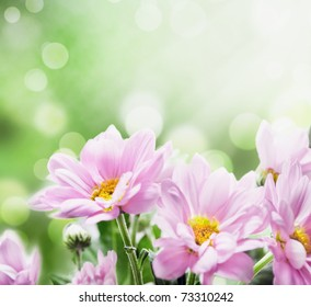 beautiful pink flowers in the garden with  spring bokeh background