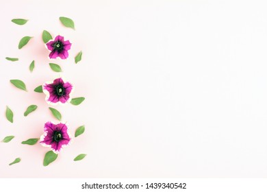 Beautiful pink flowers on white background. Top view, copy space.
