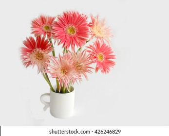 Beautiful pink gerbera flower blooming on white background