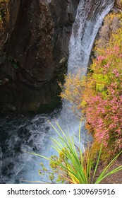 Beautiful pink heather near the waterfall of Tongariro in New Zealand