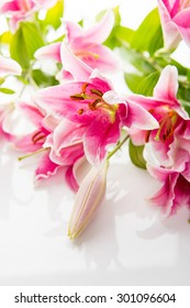 Beautiful Pink Lilies on White Background