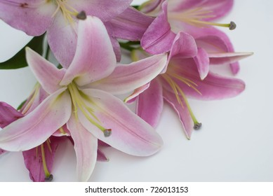 Beautiful pink lily flower bouquet isolated on white background. Flower in the corner.