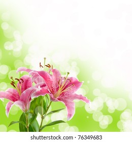Beautiful pink lily on a green and white background