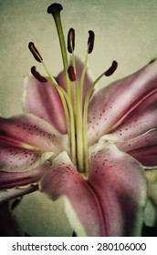 Beautiful pink lily on textured background